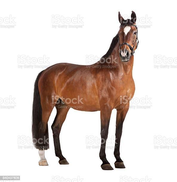 Photo of Horse white background