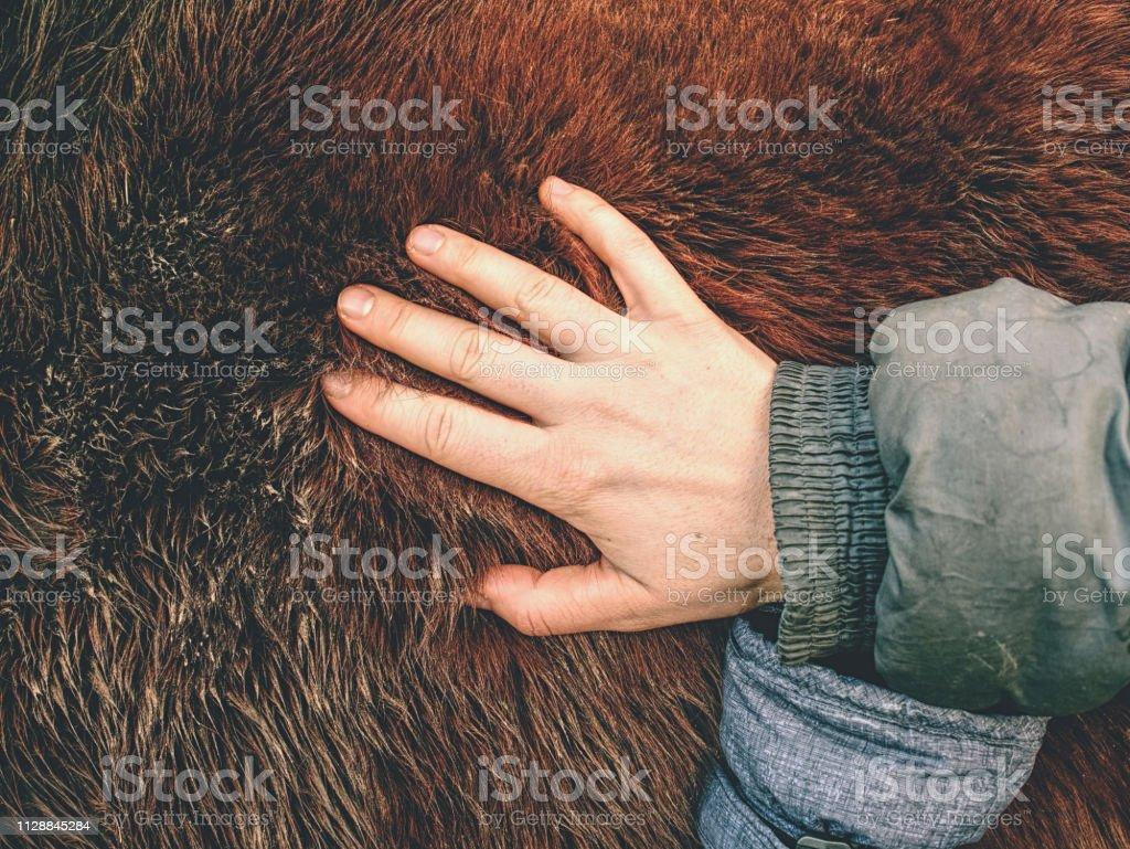 Horse winter fur. Animals prepare bodies stock photo