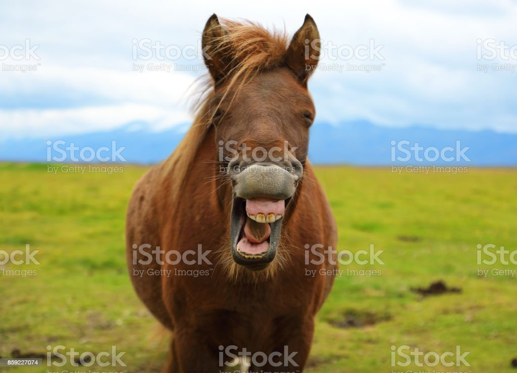 Horse with a sense of humor stock photo