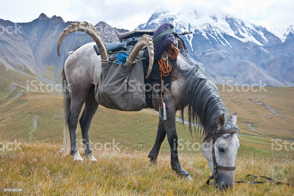 Horse with a trophy of ibex after hunting stock photo