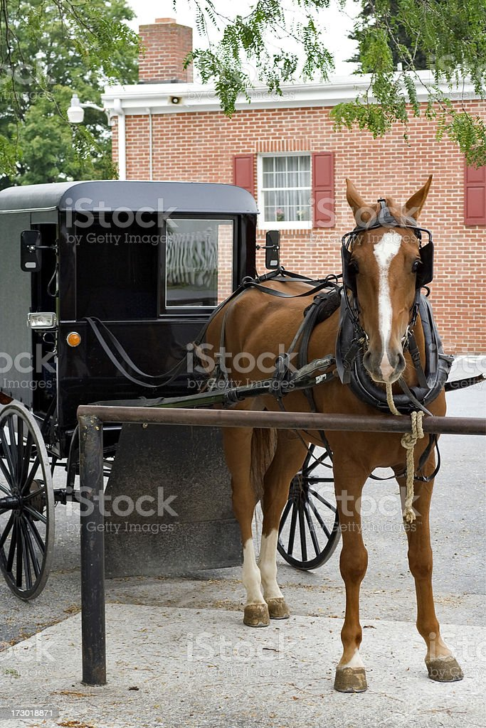 Horse with Amish buggy vertical royalty-free stock photo