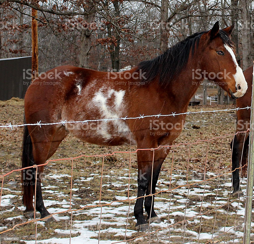 Horse With An X stock photo