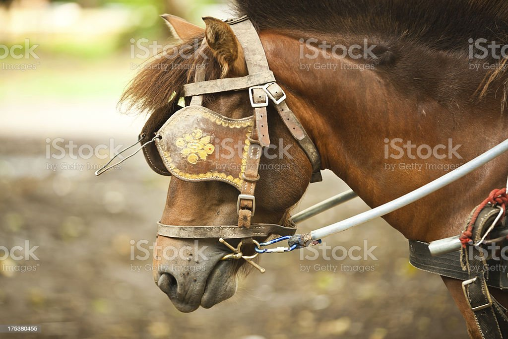 Horse with Blinkers at Tourist attraction in Thailand. stock photo