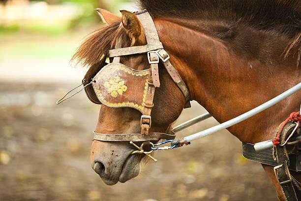 pferd mit blinkers im touristenattraktion in thailand. - scheuklappe stock-fotos und bilder