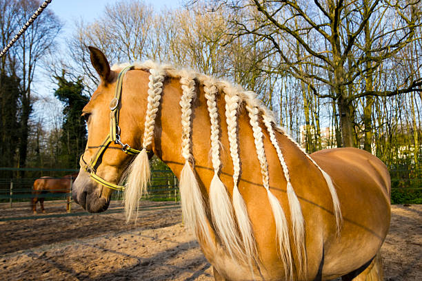 Horse with braids agains spring background stock photo