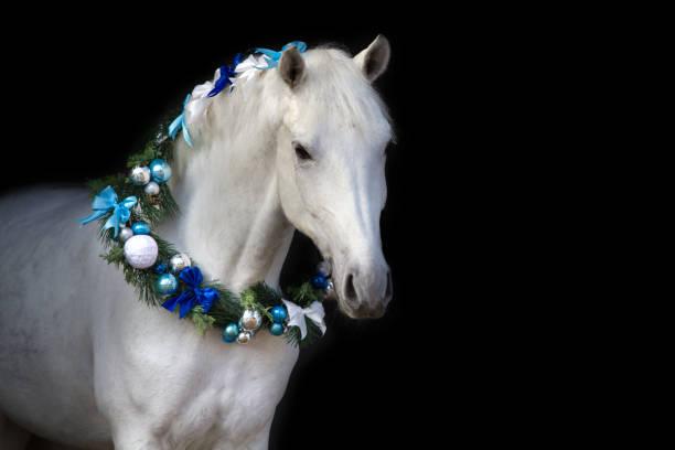 Horse with christmas decoration picture id841519870?b=1&k=6&m=841519870&s=612x612&w=0&h=gzvhepsdjs kbp8cwmw04tbgrctd6wiwiy2gjsbicju=