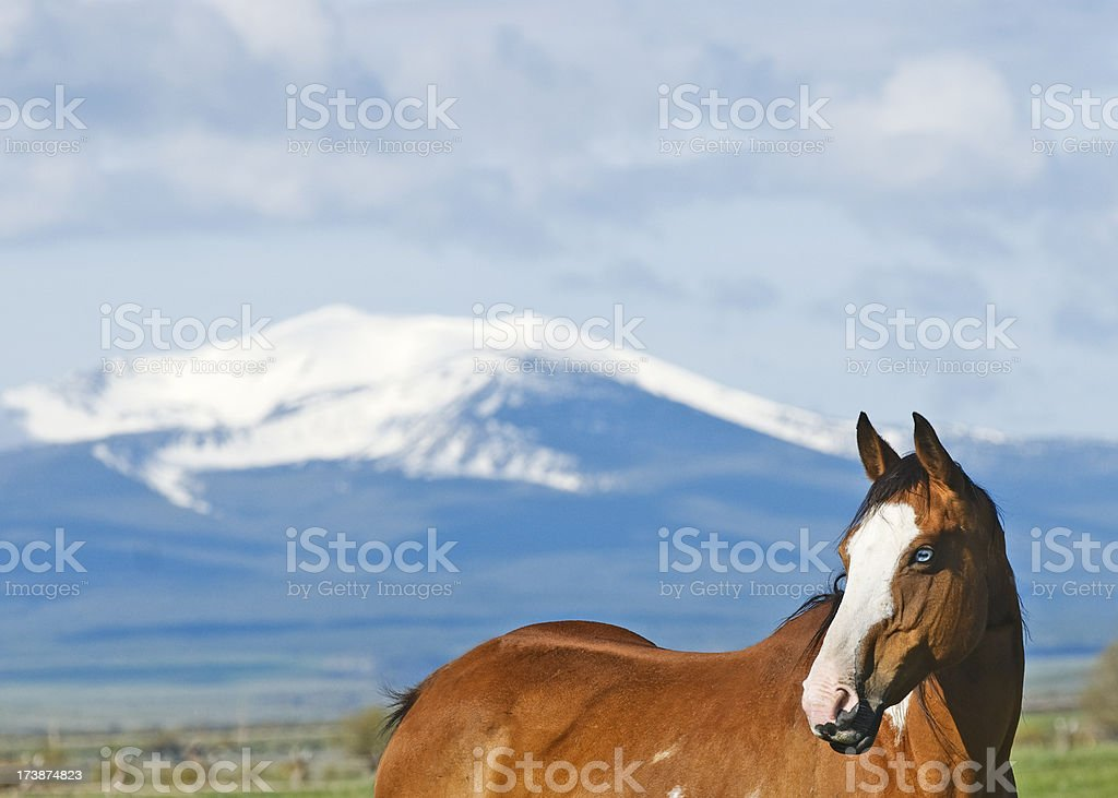 Horse with Copyspace stock photo