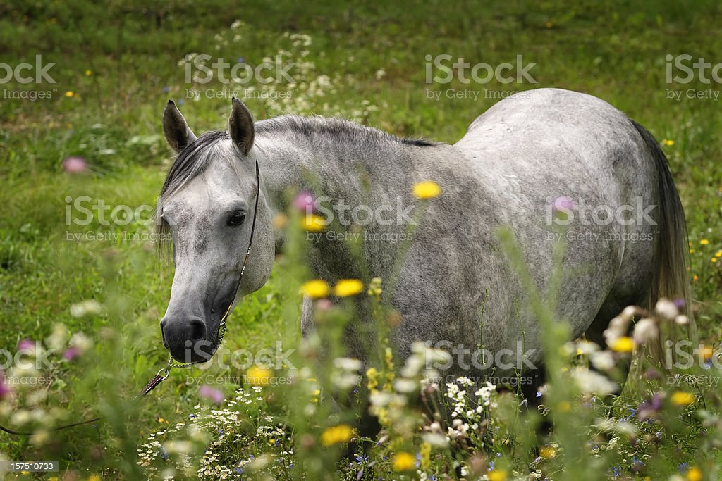 Horse with flowers stock photo