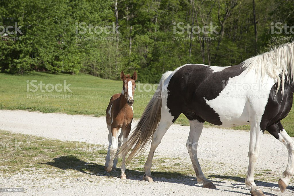 Horse with foal royalty-free stock photo