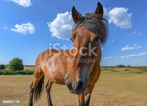 Horse with good hair looks at the camera