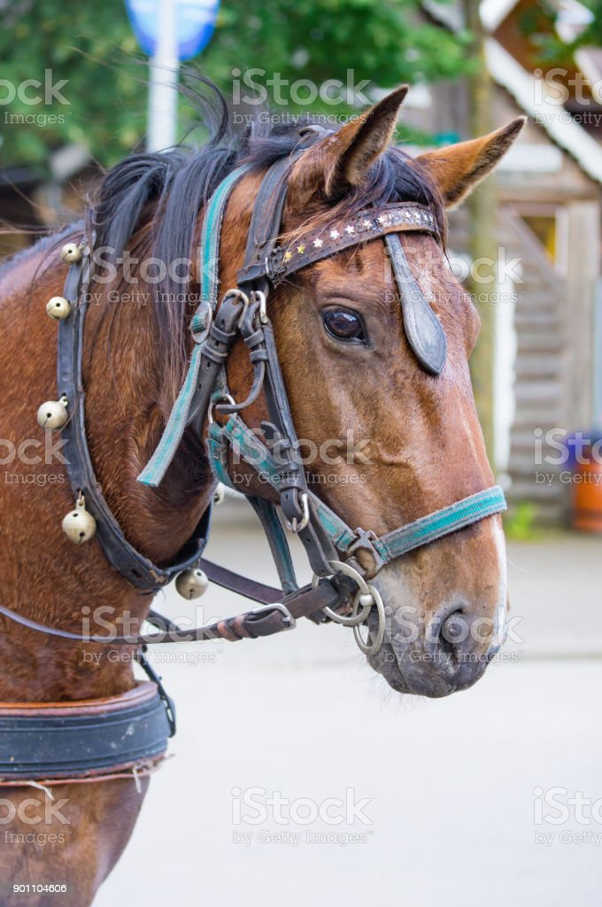 Horse With Leather Harness And Horse Bells Stock Photo & More ...