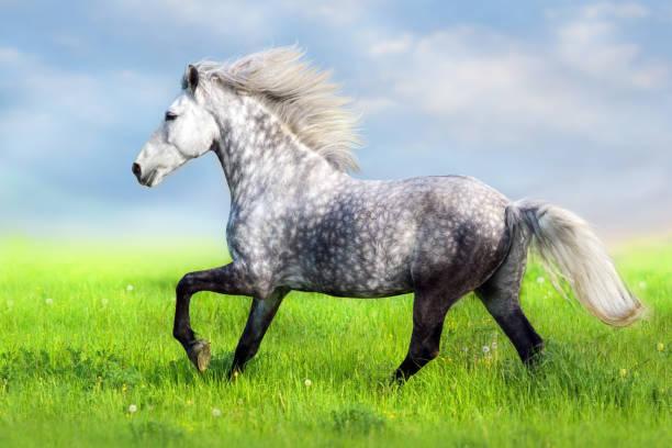 Horse with long mane picture id957737134?b=1&k=6&m=957737134&s=612x612&w=0&h=lecyuct4s1v zmblvhcs3 bxlfiukkrwpvoggadbhtg=