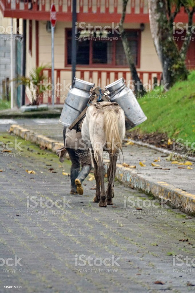 Horse with milk jugs on its side - Royalty-free Ecuador Stock Photo