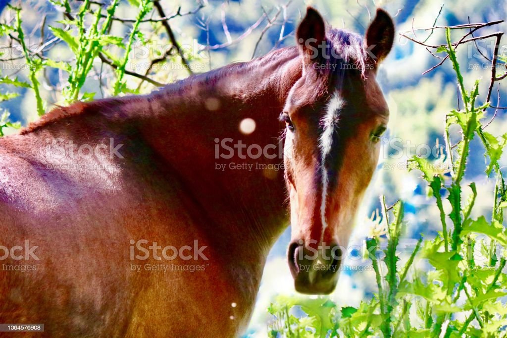A horse with no name stock photo
