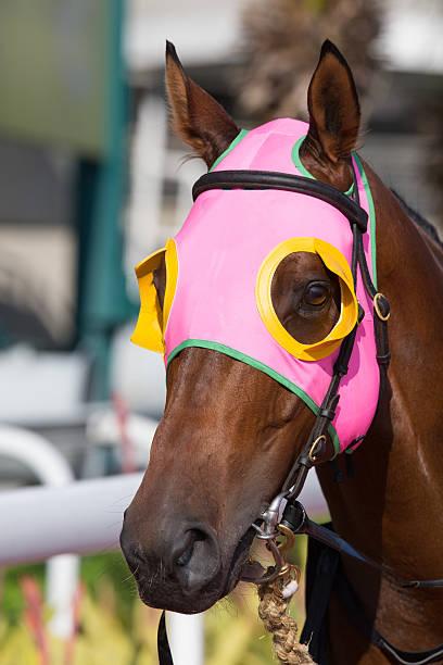 pferd mit rosa scheuklappe - scheuklappe stock-fotos und bilder