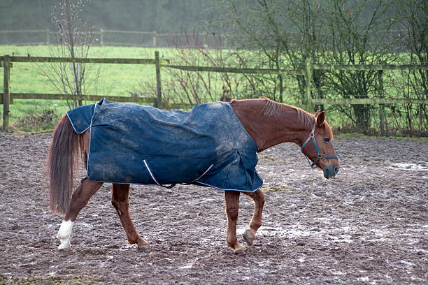 Horse with rain blanket for cold weather picture id477525632?b=1&k=6&m=477525632&s=612x612&w=0&h=hf sfctmrlyvnl ke0qfnkcd4dsixofsparrhovzgnw=