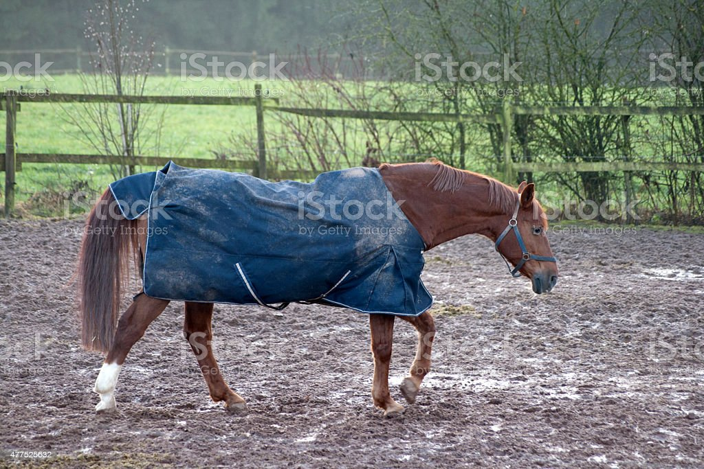 Horse with rain blanket for cold weather stock photo