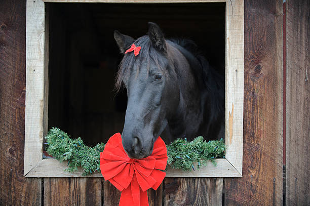 Horse with Red Ribbon Bow Framed in Barn Window stock photo