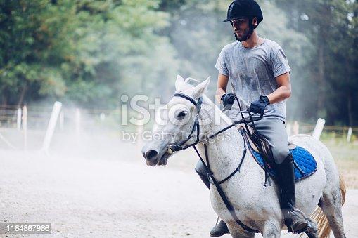 Horse, Running, Sports Race, Animal, White