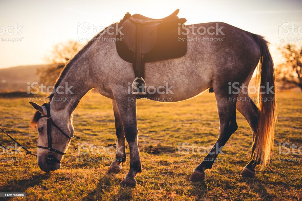 Horse With Stirrup At Sunset Stock Photo Download Image Now Istock