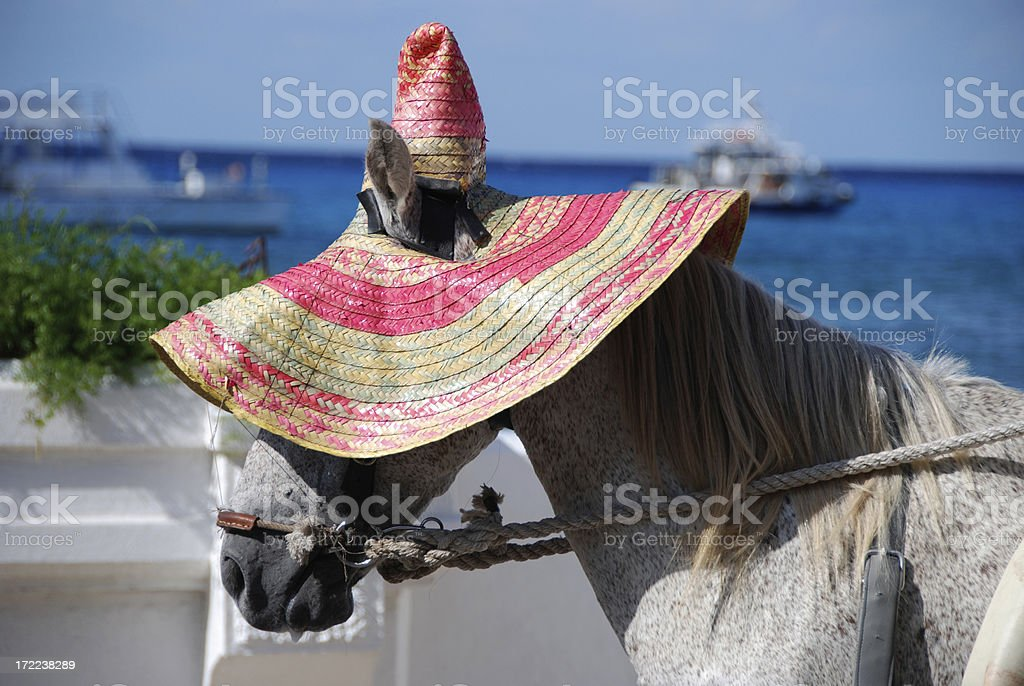 Horse with Sun Hat royalty-free stock photo