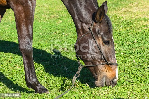 Woman spending time with her horse training sand arena feeding outdoors exercise late afternoon blue sky day