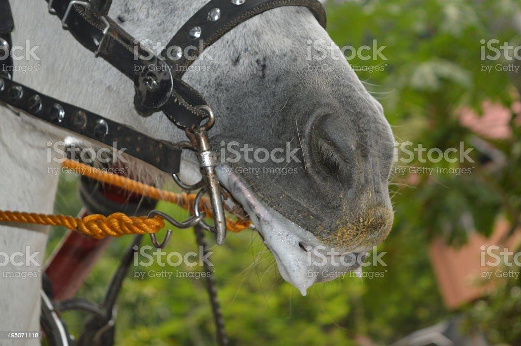 Horse working hard stock photo