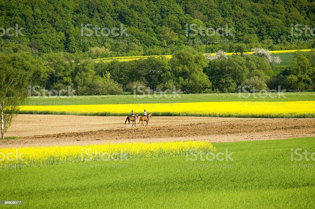 Horseback excursion royalty-free stock photo