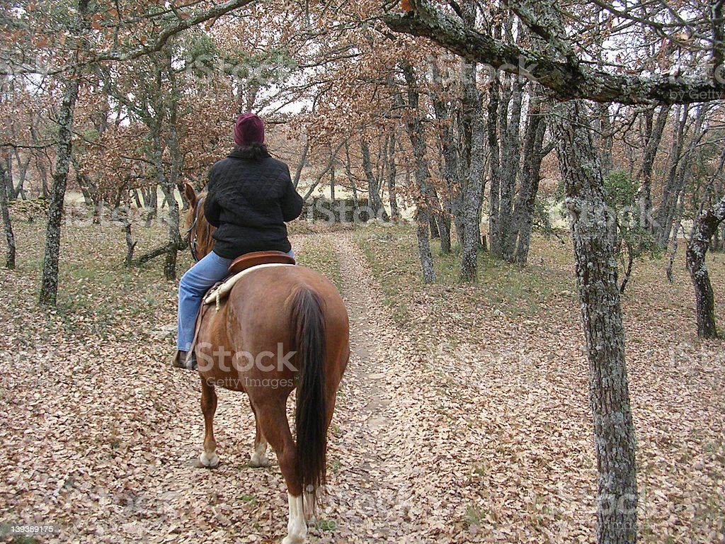 Horseback in Provence stock photo