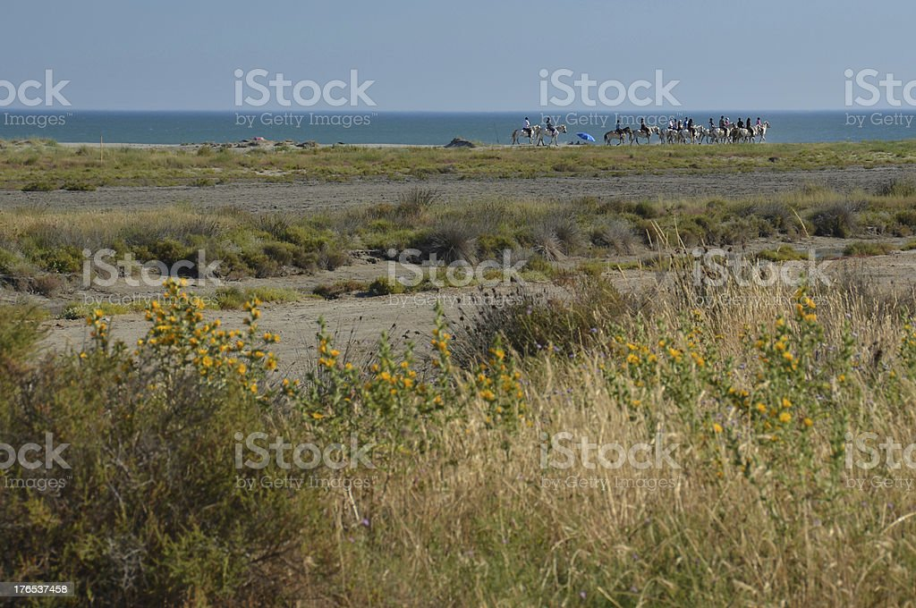 Horse-back riders on a beach in Camargue royalty-free stock photo