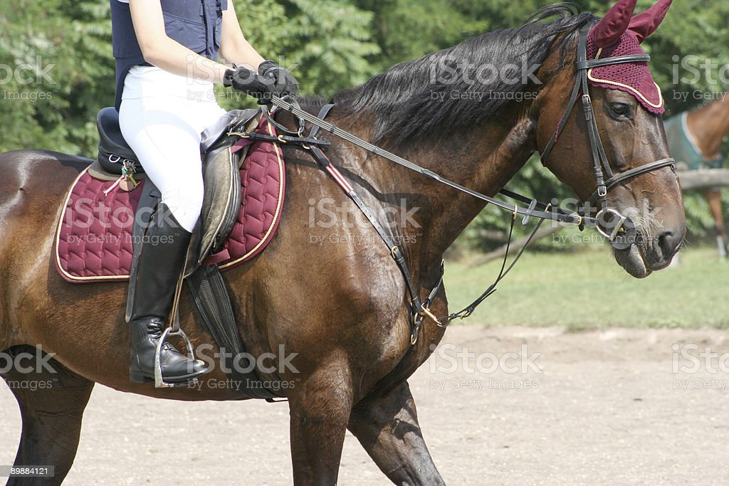 Horseback Riding Detailshot royalty-free stock photo