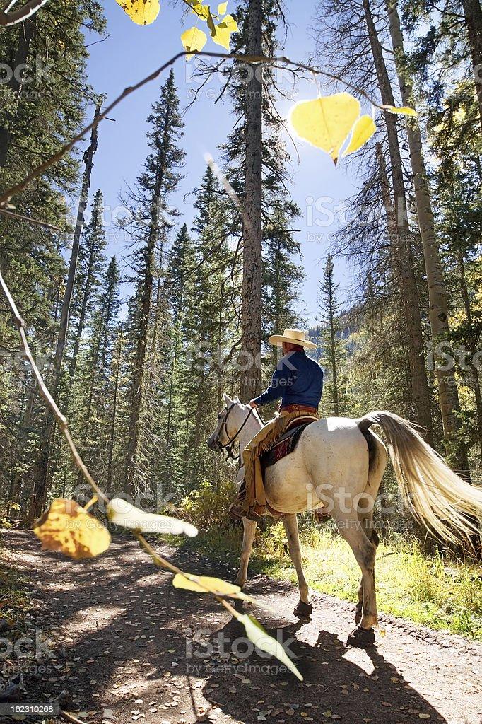 horseback riding forest stock photo