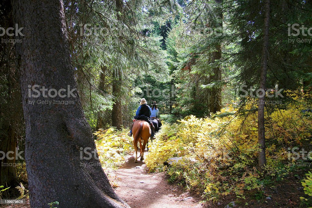 horseback riding in forest stock photo