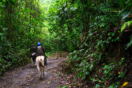 Horseback riding on foot of  Volcano Arenal, Costa Rica.