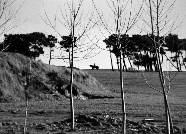 paseos a caballo a través de campos y árboles - monse del campo fotografías e imágenes de stock
