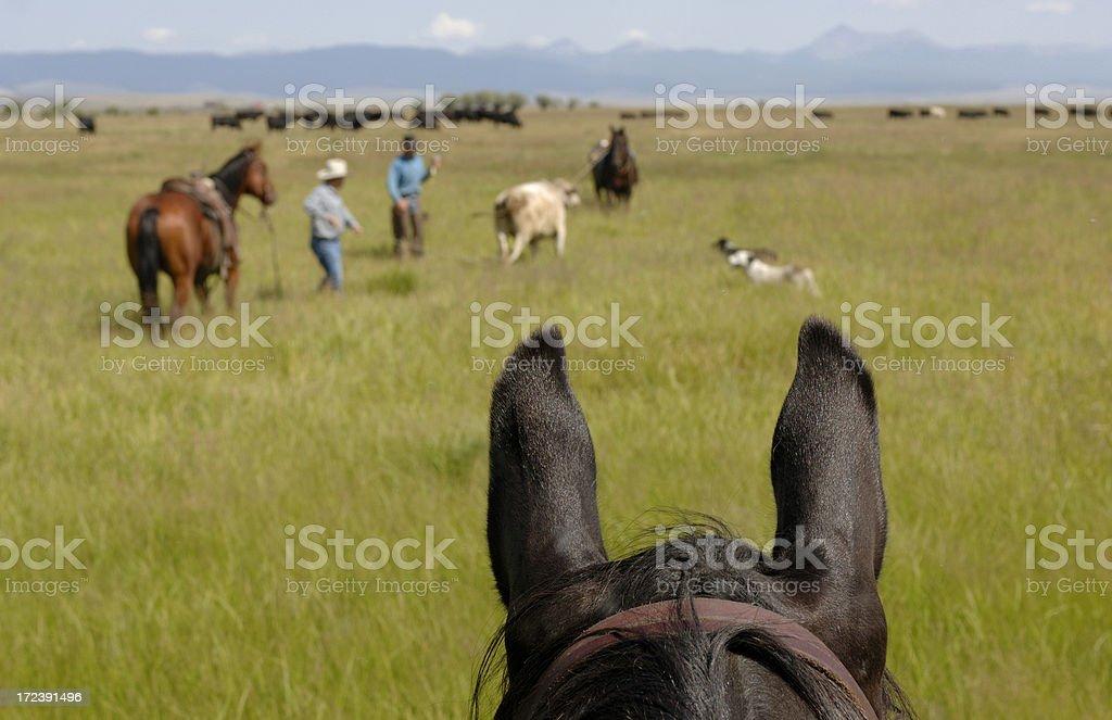 Horseback View stock photo