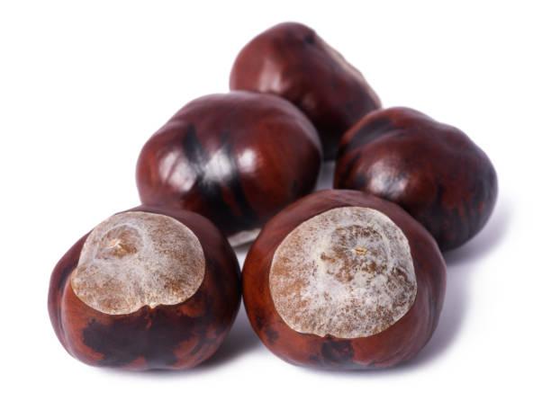horse chestnut  - kastanientiere stock-fotos und bilder
