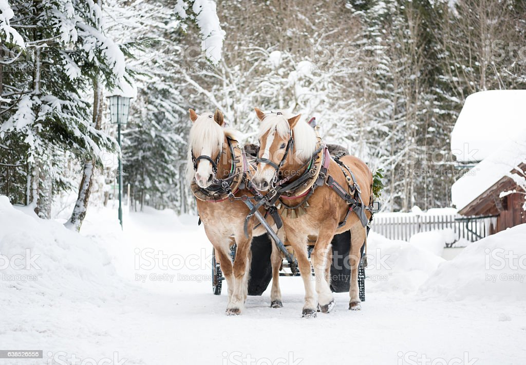 Horse-drawn sleigh ride, Winter Wonderland stock photo