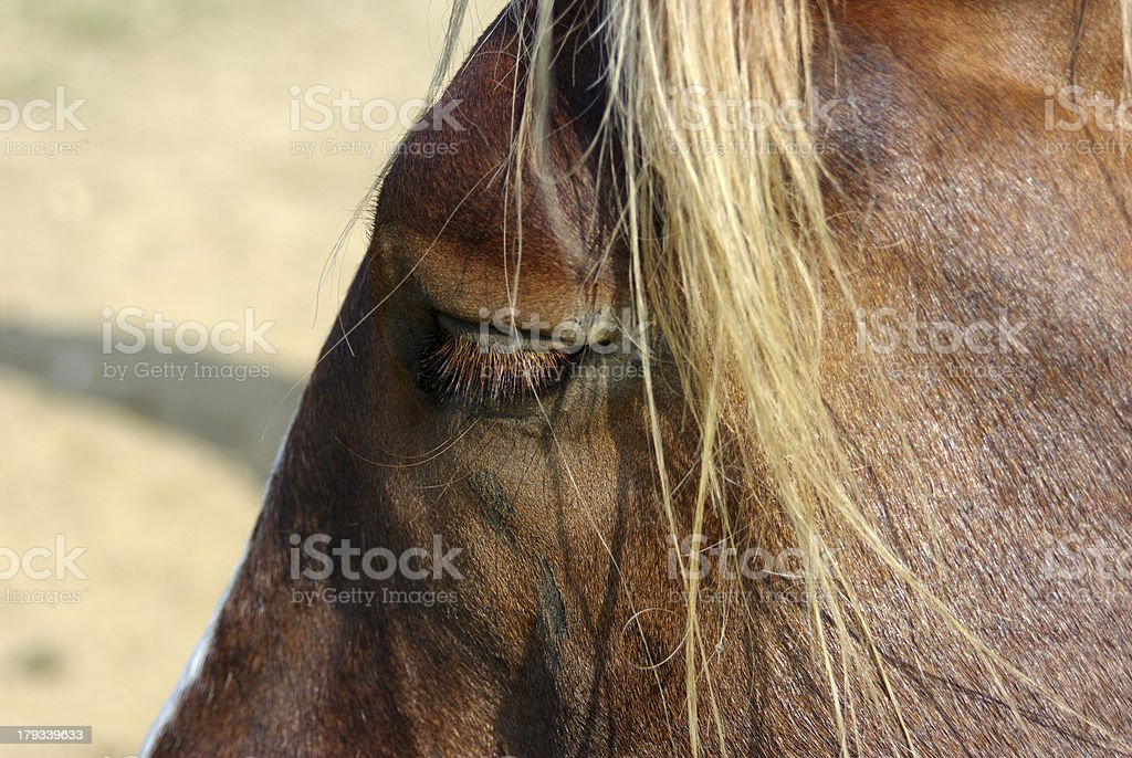 Horse-head in close-up royalty-free stock photo