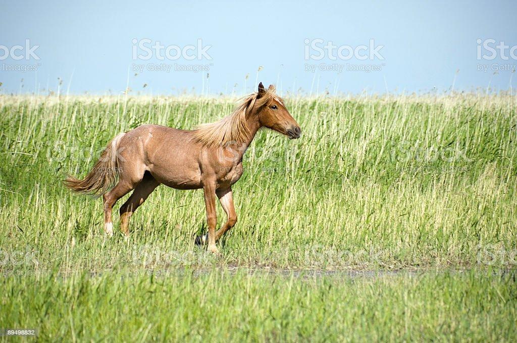 Horsein La prairie. foto stock royalty-free