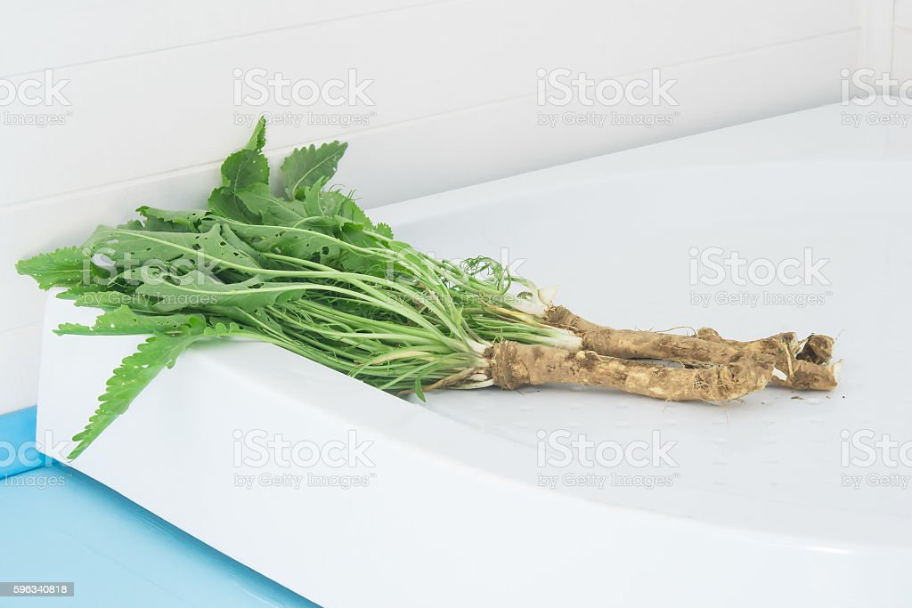 Horseradish fresh out of the ground with the tops royalty-free stock photo