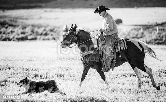 Side view of a man riding his horse through grass, with his dog running along side.