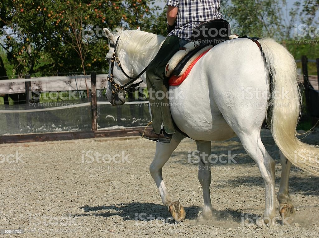 Horseriding stock photo