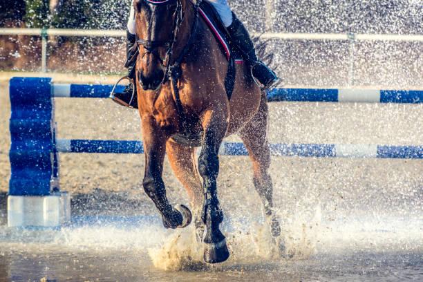 ridning genom en vatten-gardin - hästhoppning bildbanksfoton och bilder