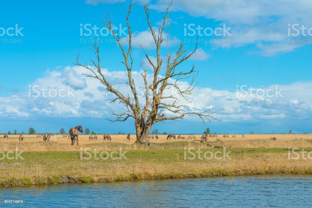 春天湖岸邊的馬 免版稅 stock photo