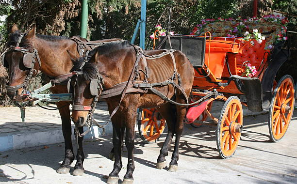 pferd und kutsche - scheuklappe stock-fotos und bilder