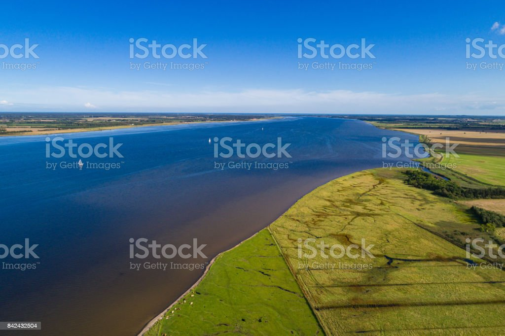 horses and gulls on a summer day with a blue skye stock photo