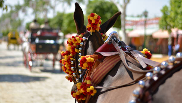 Horses and mules decked out for traditional Spanish parties