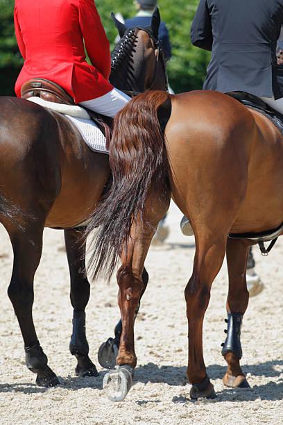 pferde und raiders - fuchs kissen stock-fotos und bilder