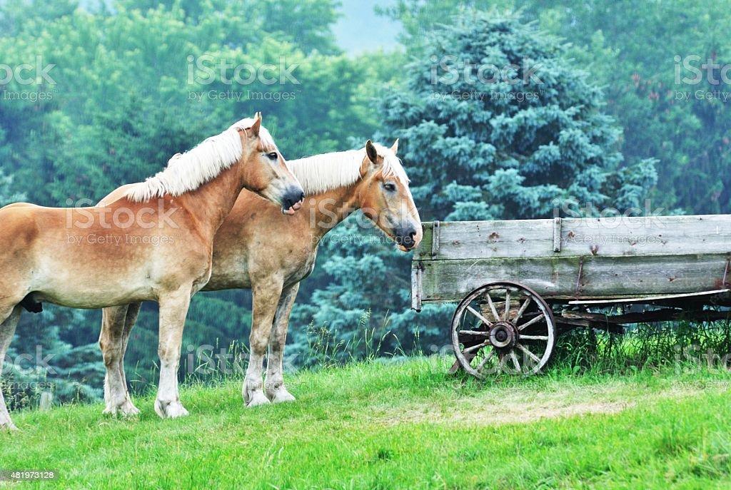 Horses and Wagon stock photo